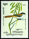 Cl: Long-tailed Shrike (Lanius schach nigriceps) SG 509 (1984) 65