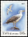 Cl: Unidentified Gull (Larus sp.) SG 3881 (1999)