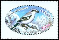 Cl: Chinese Grey Shrike (Lanius sphenocercus) new (2016)