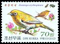 Cl: Chestnut-flanked White-eye (Zosterops erythropleurus)(not catalogued)  (2012)
