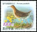 Cl: Band-bellied Crake (Porzana paykullii) SG 4920 (2010)