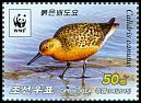 Cl: Red Knot (Calidris canutus) new (2015)