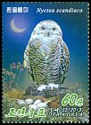 Cl: Snowy Owl (Bubo scandiacus)(Repeat for this country)  new (2013)