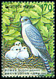 Cl: Chinese Goshawk (Accipiter soloensis) SG 2327 (1999)