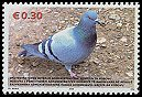 Cl: Rock Pigeon (Columba livia)(not catalogued)  (2006)  [5/31]