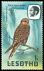 Cl: Greater Kestrel (Falco rupicoloides) <<Seotsanyana>>  SG 437 (1981) 15