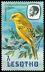 Cl: Yellow Canary (Serinus flaviventris) <<Tsoere>>  SG 505 (1981) 30