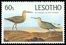Cl: Stilt Sandpiper (Calidris himantopus)(Out of range and no other stamp)  SG 650 (1985) 200