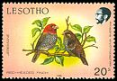 Cl: Red-headed Finch (Amadina erythrocephala) <<Jeremane>>  SG 797 (1988) 30