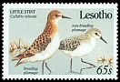 Cl: Little Stint (Calidris minuta) SG 911 (1989) 125