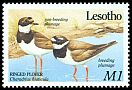 Cl: Common Ringed Plover (Charadrius hiaticula) SG 912 (1989) 175
