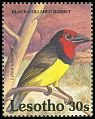 Cl: Black-collared Barbet (Lybius torquatus) SG 1075 (1992)