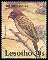 Cl: Red-billed Quelea (Quelea quelea) SG 1077 (1992)
