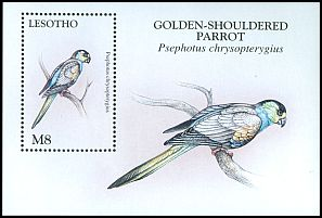Cl: Golden-shouldered Parrot (Psephotus chrysopterygius)(Out of range)  SG 1377b (1998)