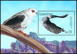 Cl: Black-shouldered Kite (Elanus caeruleus) SG 1884 (2001)