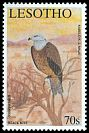 Cl: Black Kite (Milvus migrans) <<Kholokholo>>  SG 1862 (2001)