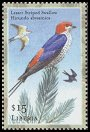 Cl: Lesser Striped-Swallow (Cecropis abyssinica) new (2001)  [2/4]