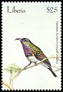 Cl: Variable Sunbird (Cinnyris venustus) new (2001)  [2/31]