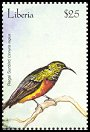 Cl: Regal Sunbird (Cinnyris regius)(Out of range)  new (2001)  [2/31]