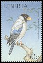Cl: Japanese Grosbeak (Eophona personata)(Out of range)  new (1999)
