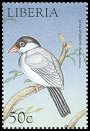 Cl: Java Sparrow (Padda oryzivora)(Out of range)  new (1999)