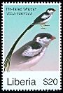 Cl: Pin-tailed Whydah (Vidua macroura) new (2008)  [4/48]