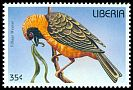 Cl: Vitelline Masked-Weaver (Ploceus vitellinus)(Out of range)  new (1996)