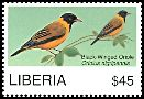 Cl: Black-winged Oriole (Oriolus nigripennis) new (2008)  [4/48]