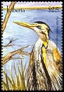 Cl: Purple Heron (Ardea purpurea) new (2001)  [2/25]