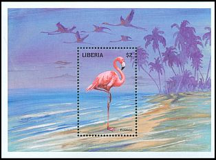 Cl: Caribbean Flamingo (Phoenicopterus ruber)(Out of range)  new (1998)