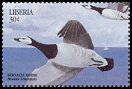 Cl: Barnacle Goose (Branta leucopsis)(Out of range)  new (1999)