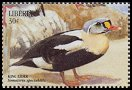 Cl: King Eider (Somateria spectabilis)(Out of range)  new (1999)