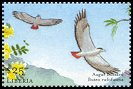 Cl: Augur Buzzard (Buteo augur)(Out of range)  new (2001)  [2/4]