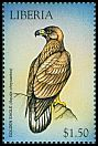 Cl: Golden Eagle (Aquila chrysaetos)(Out of range)  new (1999)