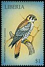 Cl: American Kestrel (Falco sparverius)(Out of range)  new (1999)