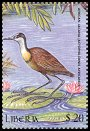 Cl: African Jacana (Actophilornis africanus)(Repeat for this country)  new (2000)