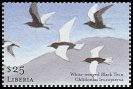 Cl: White-winged Tern (Chlidonias leucopterus) new (2001)  [2/12]