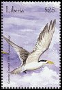 Cl: Great Crested Tern (Sterna bergii)(Out of range)  new (2001)  [2/25]