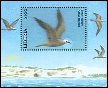 Cl: Brown Noddy (Anous stolidus) new (2001)
