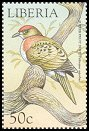 Cl: Superb Fruit-Dove (Ptilinopus superbus)(Out of range)  new (1999)