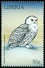 Cl: Snowy Owl (Bubo scandiaca)(Out of range)  new (1999)