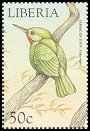 Cl: Jamaican Tody (Todus todus)(Out of range)  new (1999)