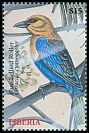 Cl: Blue-bellied Roller (Coracias cyanogaster) new (2000)