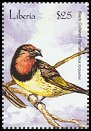 Cl: Black-collared Barbet (Lybius torquatus)(Out of range)  new (2001)  [2/25]