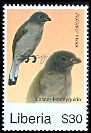 Cl: Lesser Honeyguide (Indicator minor) new (2008)  [4/48]
