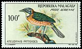 Cl: Pitta-like Ground-Roller (Atelornis pittoides) SG 65 (1963) 225