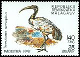 Cl: Sacred Ibis (Threskiornis aethiopicus)(not catalogued)  (1991)