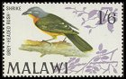 Cl: Grey-headed Bushshrike (Malaconotus blanchoti) SG 317 (1968) 500