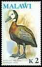 Cl: White-faced Whistling-Duck (Dendrocygna viduata) SG 484 (1975) 650