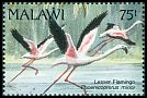 Cl: Lesser Flamingo (Phoenicopterus minor) SG 890 (1992) 225